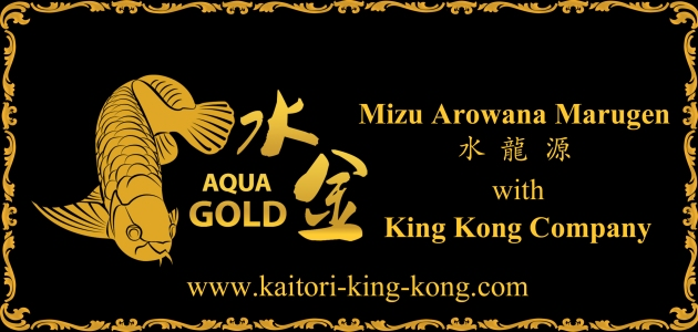 Mizu Arowana Marugen with King Kong Company